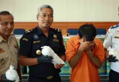 Bea Cukai Ngurah Rai Diapresiasi Gagalkan Penyelundupan 10 Ribu Baby Lobster